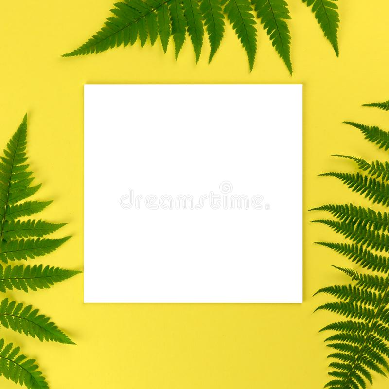 Artistic mockup for your artwork with beautiful fern leaves and empty card shot from the top. Flat lay summer minimalistic stock photography