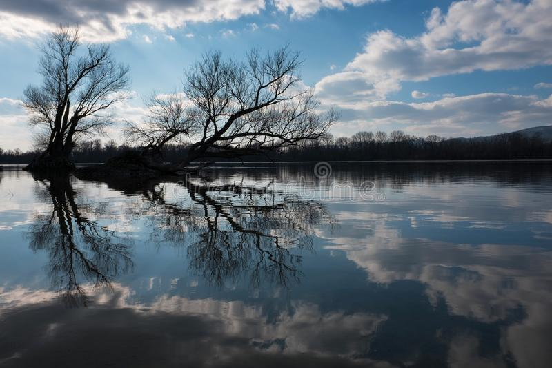 Artistic photo of bare trees reflecting on a river`s water surfa stock photography