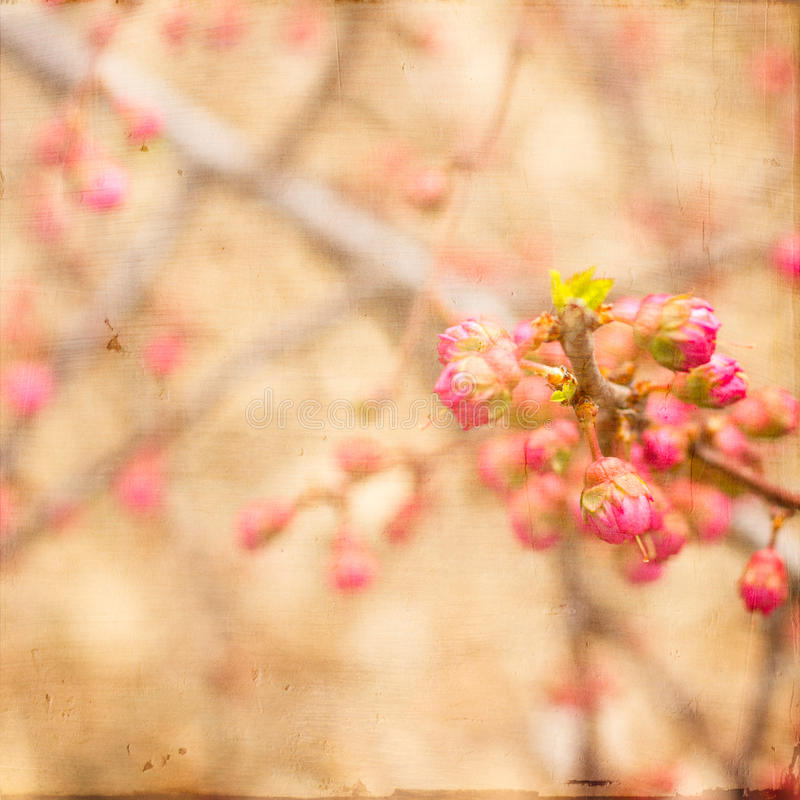 Free Artistic Pink Spring Buds Stock Photos - 34965453