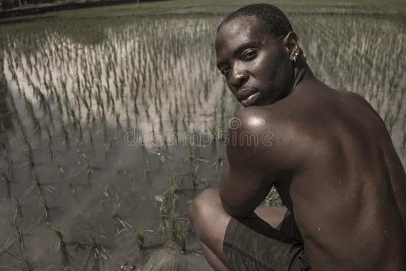 Artistic portrait outdoors of young attractive and athletic black afro American man posing relaxed and cool at tropical rice field. Plantation in male beauty stock photography