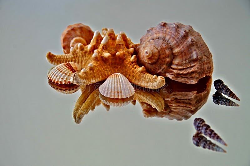 Artistic Sea Shell Reflection stock photo