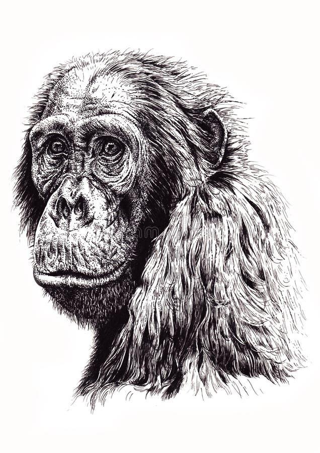 Artistic sketch of ape stock photo