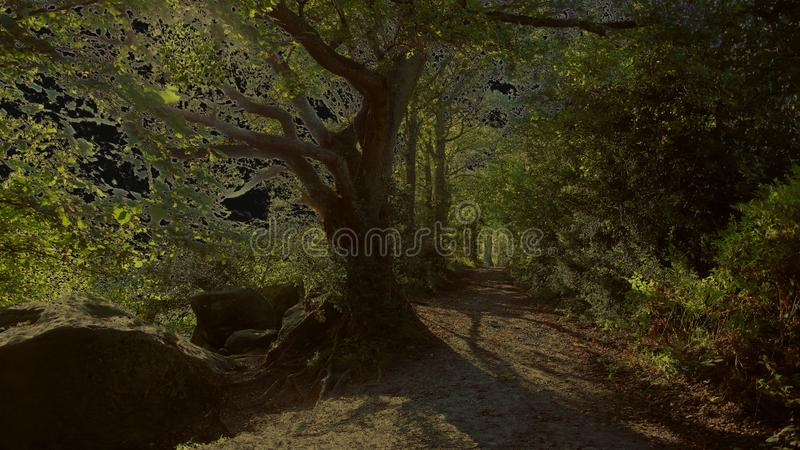Artistic spooky yellow version of along the path royalty free stock photos