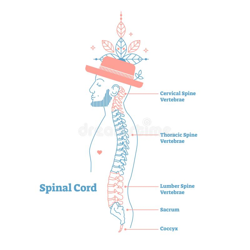 Artistic style anatomical spine vector illustration with conceptual decorative elements. Cervical,thoracic,lumber sections scheme. Artistic style anatomical stock illustration