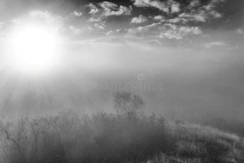 Artistiek landschap van een nevelig bos met het beeld van zonnestraalbw royalty-vrije stock foto