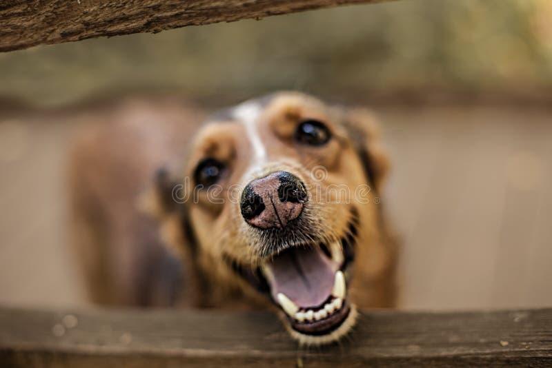 Artistieke foto van een rode hond De hond glimlacht, is haar neus bevlekte laag stock foto