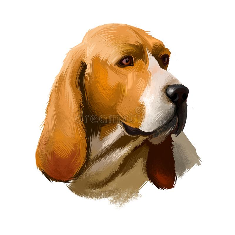 Artois Hound dog digital art illustration isolated on white background. Artois Hound is a rare breed of dog, and a vector illustration