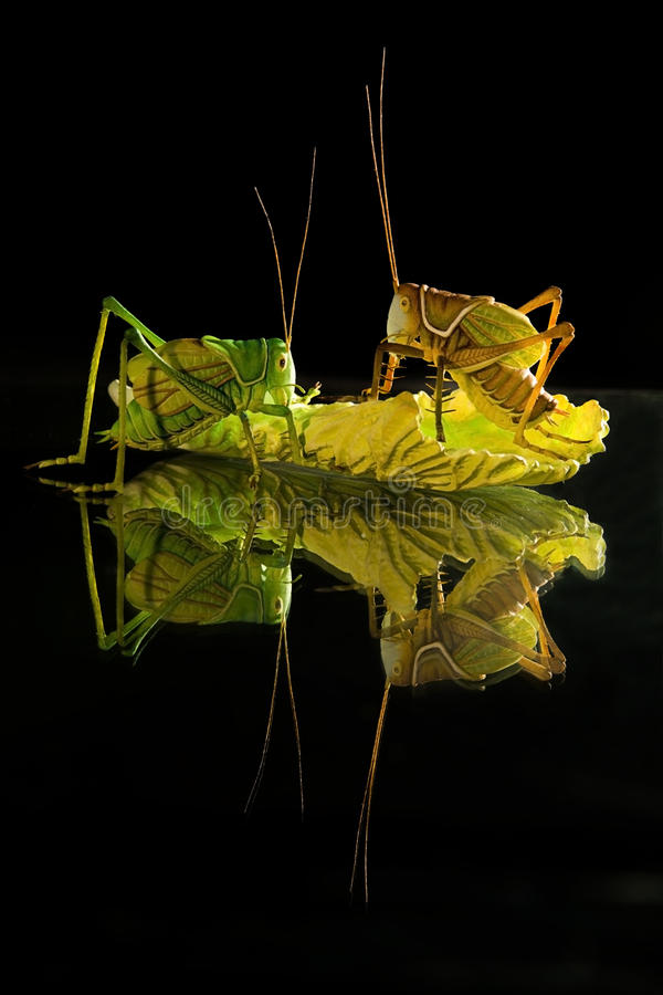 Arts of insect and vegitable as still life stock photography