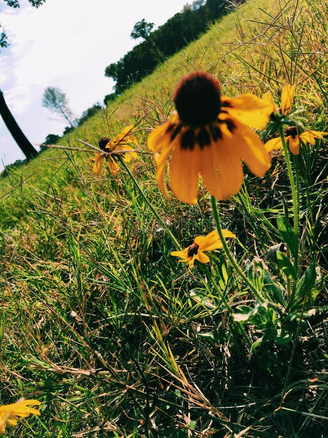 Artsy yellow flower. Yellow flower with awesome perspective stock images