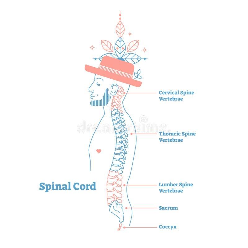 Artystycznego stylu anatomicznego kręgosłupa wektorowa ilustracja z konceptualnymi dekoracyjnymi elementami Karkowy, thoracic, ta ilustracji
