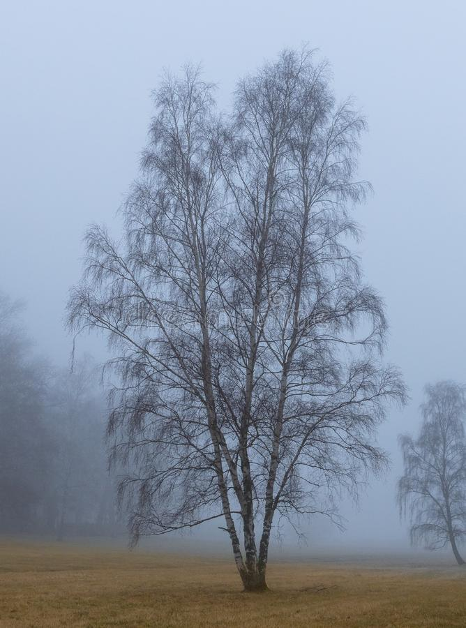 Artystyczny jeden osamotniony drzewo w mgle obraz royalty free