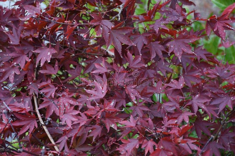 Artystyczny kolorowy dębowy jesień sezon opuszcza tło zdjęcia stock