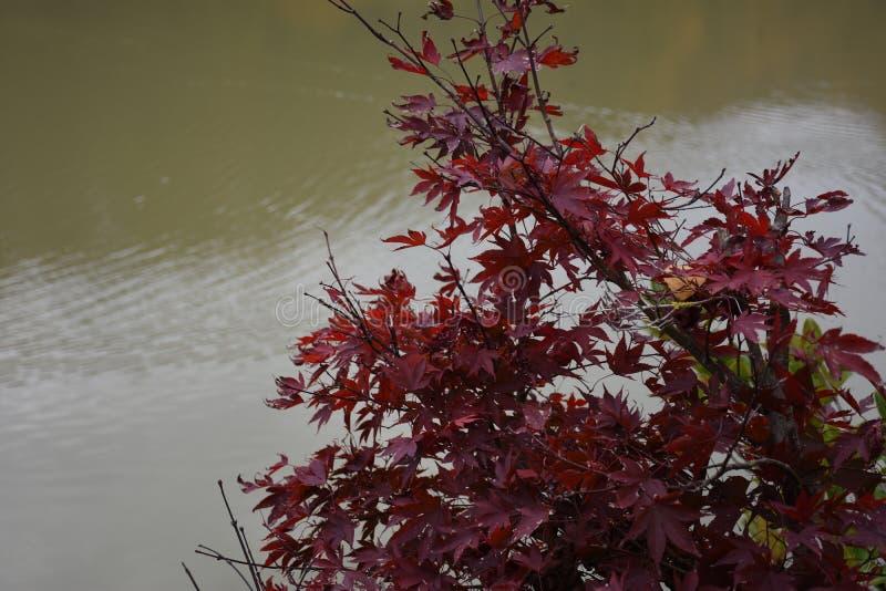 Artystyczny kolorowy dębowy jesień sezon opuszcza tło fotografia royalty free