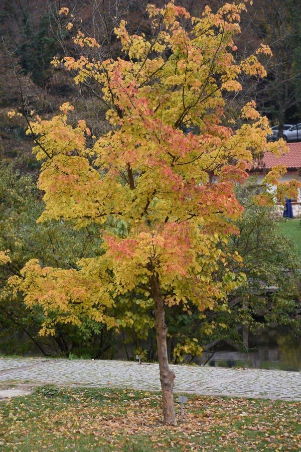 Artystyczny kolorowy dębowy jesień sezon opuszcza tło fotografia stock