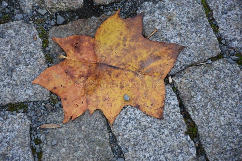 Artystyczny kolorowy dębowy jesień sezon opuszcza tło zdjęcia royalty free