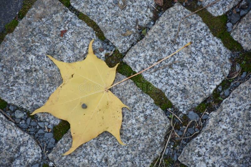 Artystyczny kolorowy dębowy jesień sezon opuszcza tło obrazy stock