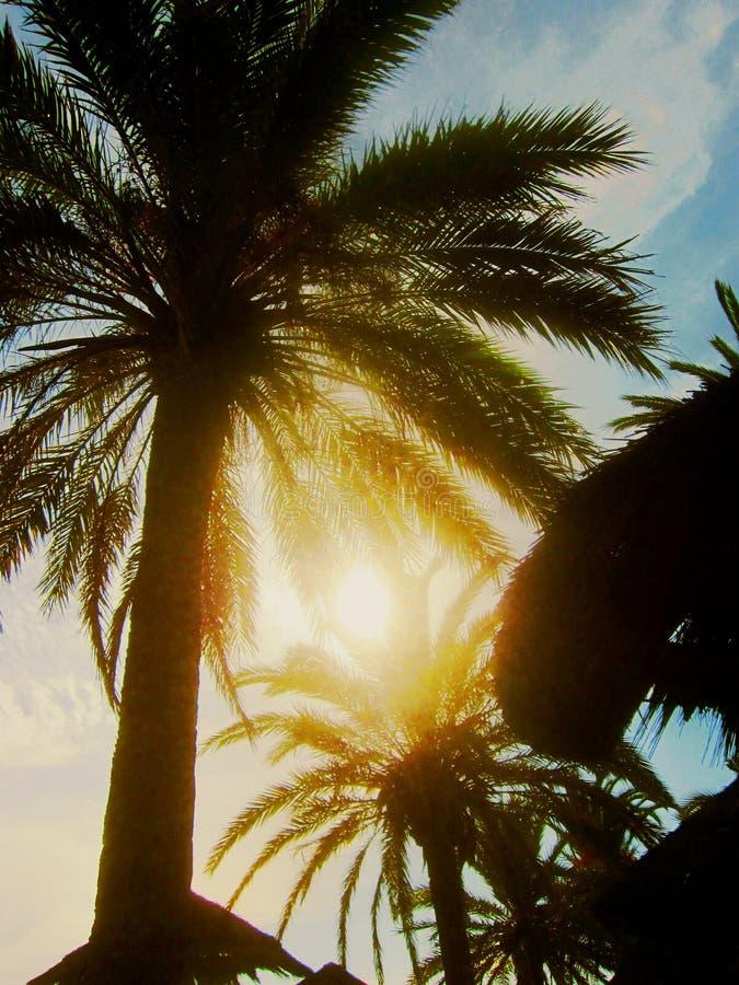 Artystyczny słońce przez palm 3 obraz stock