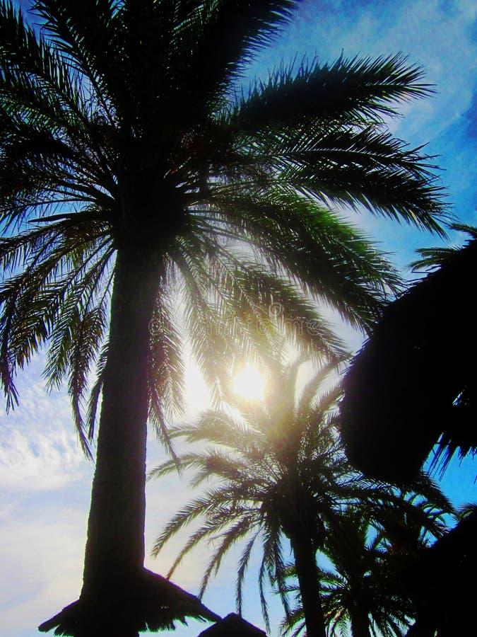 Artystyczny słońce przez palm 1 obrazy royalty free