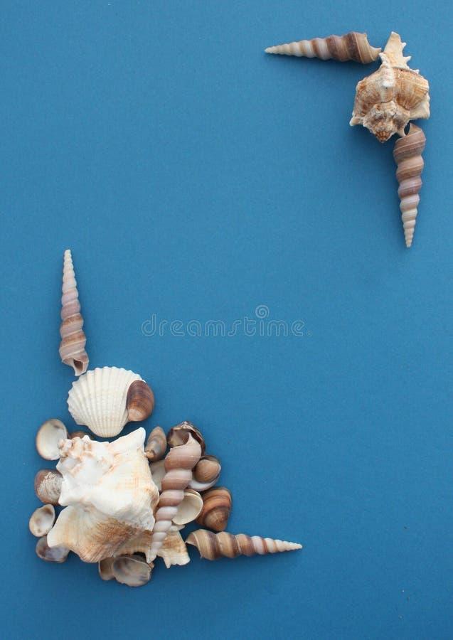 Artystyczny układ łupin w rogach na niebieskim tle obrazy stock