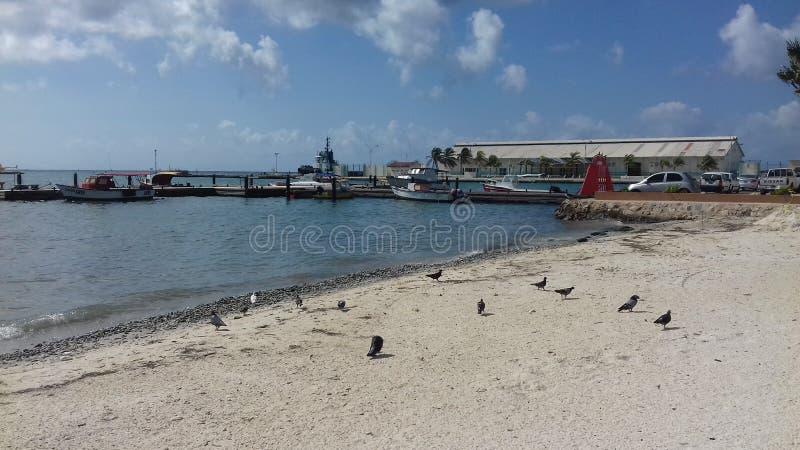 Aruba, Aruba imagens de stock