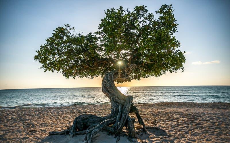 Aruba Fofoti solnedgång royaltyfria foton