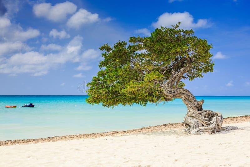 Aruba, Niederländische Antillen lizenzfreie stockfotos