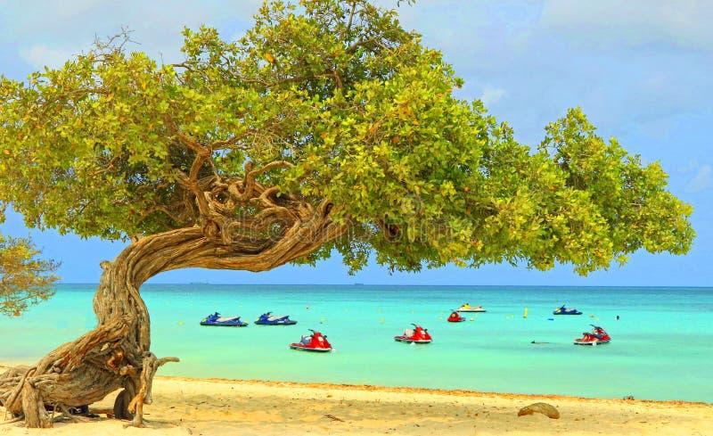 Aruba sul mar dei Caraibi immagine stock libera da diritti