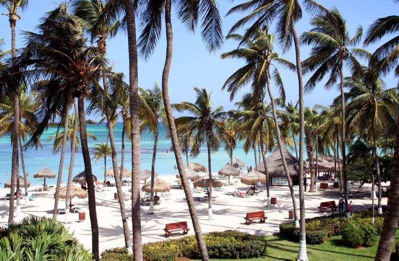 aruba wyspy karaibskiej kurort tropikalny zdjęcie royalty free