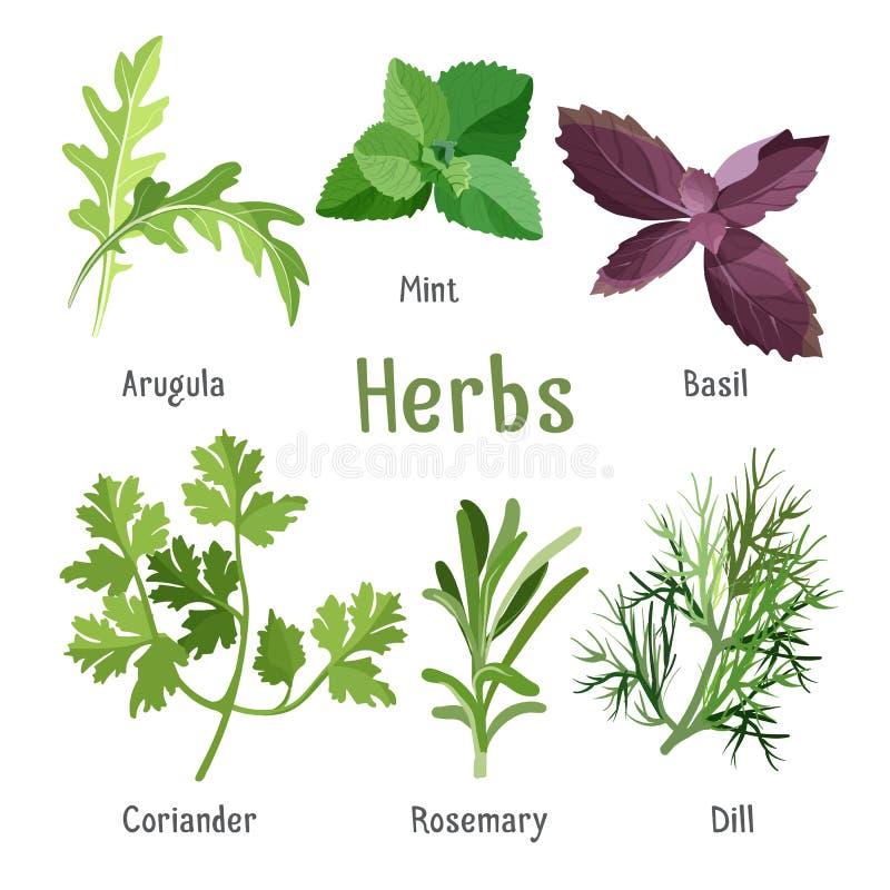 Arugula, świeża mennica, purpurowy basil, organicznie kolender, aromatyczni rozmaryny, koper ilustracji