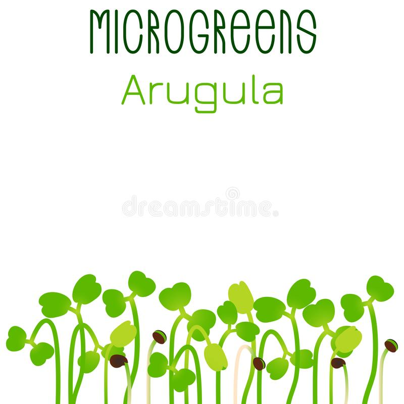 Arugula de Microgreens Conception d'emballage de graine Graines de germination d'une usine illustration stock