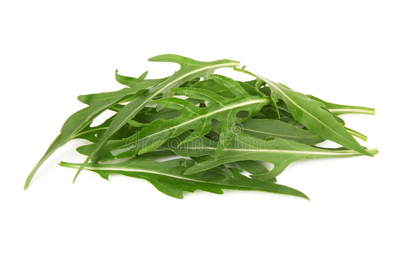 Arugula stock photography