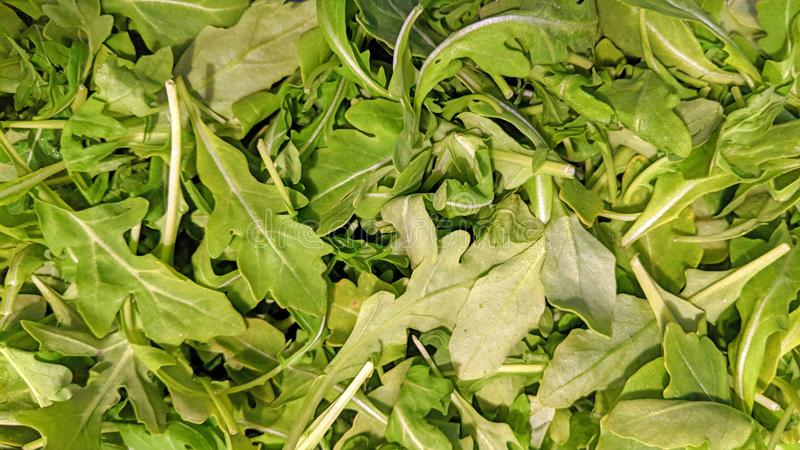 Arugula salad leaf in bulk stock image