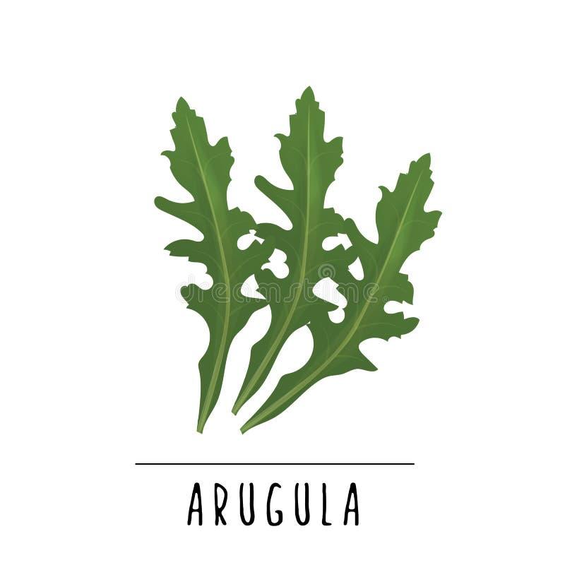 arugula wektoru ilustracja herb czosnków bay kardamonowi liści pieprzowe spice waniliowe rosemary soli ilustracja wektor