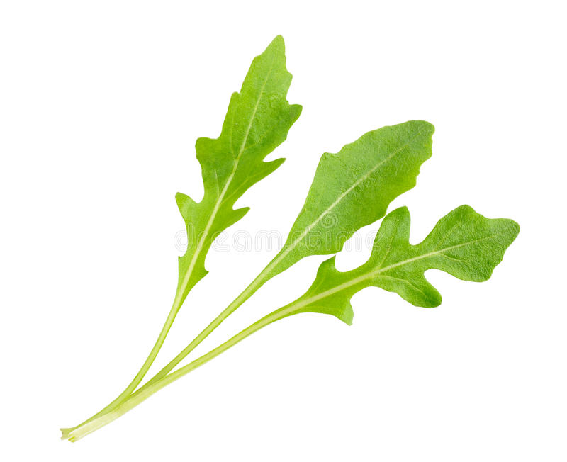 Arugula in a white background stock images