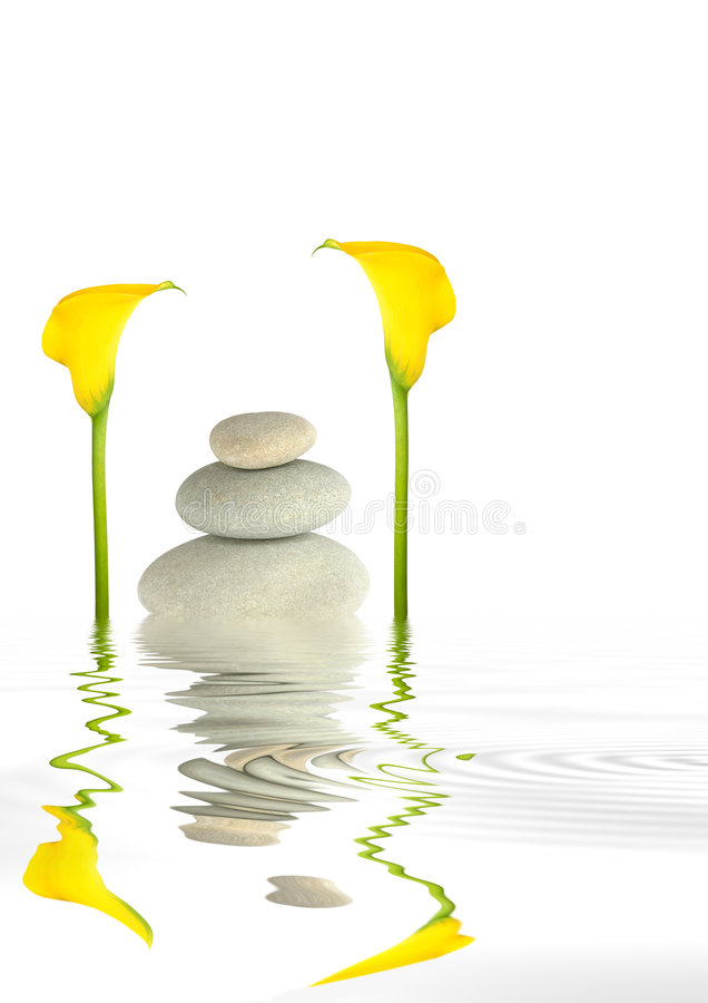 Download Arum Lily And Pebble Abstract Stock Image - Image: 6909209