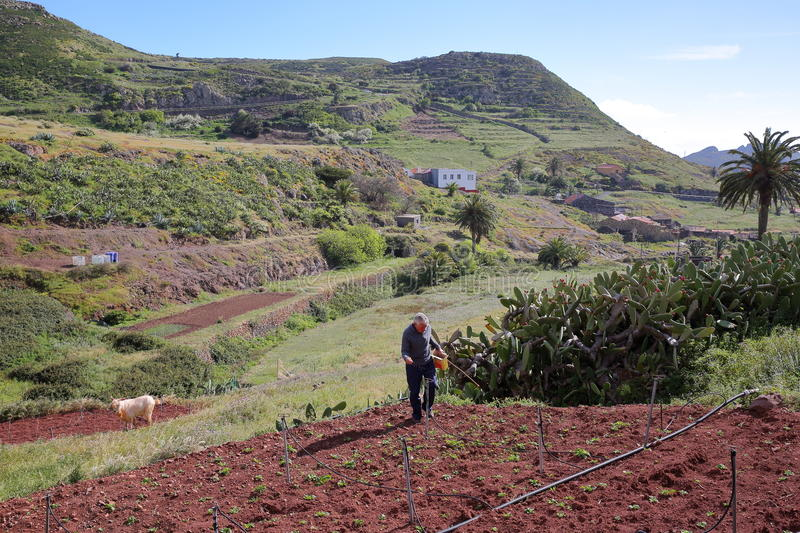ARURE, LA GOMERA, SPAIN - MARCH 21, 2017: A farmer at work with terraced fields in the background. A farmer at work with terraced fields in the background royalty free stock photos