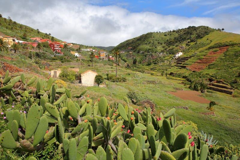ARURE LA GOMERA, SPANIEN: Kultiverade terrasserade fält nära Arure med kaktusväxter i förgrunden royaltyfri bild
