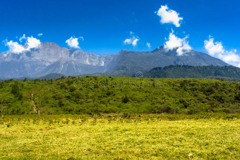 Arusha Nationalpark. A walk through Arusha nationalpark, Tanzania royalty free stock photography