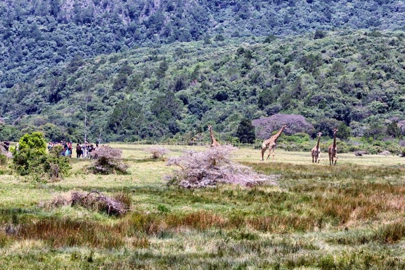 Arusha park narodowy zdjęcia stock