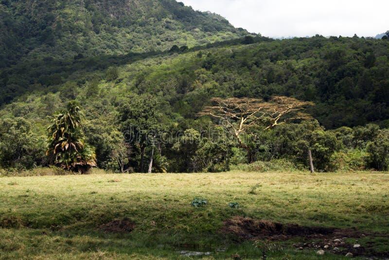 Arusha savanna. The savanna in the arusha park in tanzania royalty free stock photos