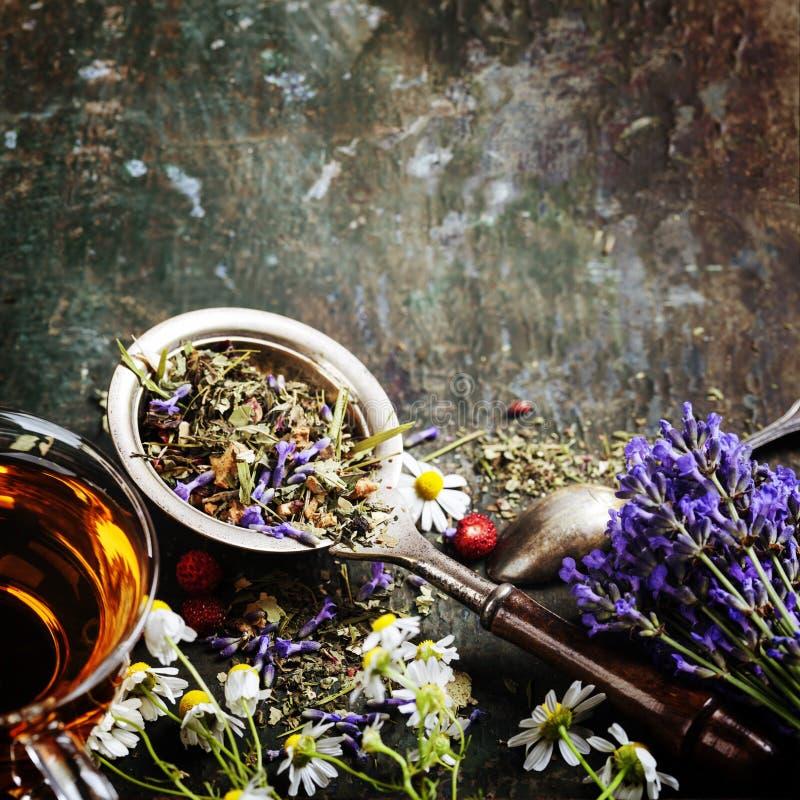 arvense杯子木贼属植物重点玻璃草本马尾注入naturopathy有选择性的茶 免版税库存图片