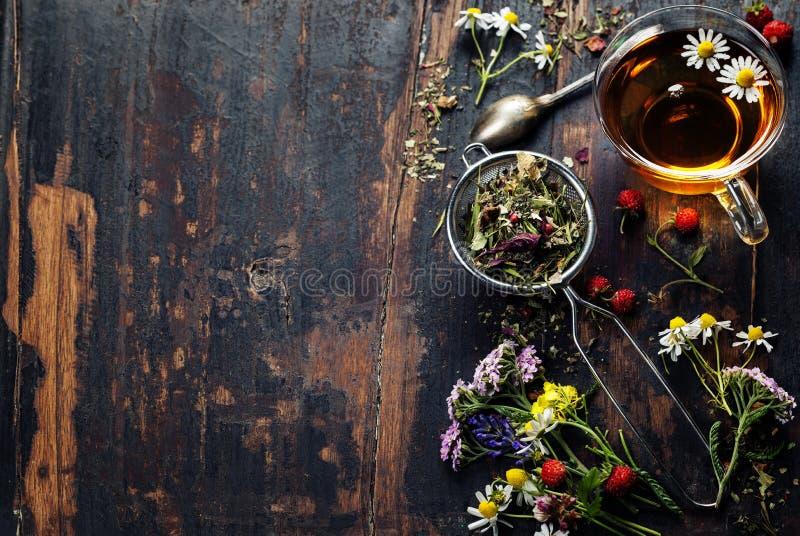 arvense φλυτζανιών equisetum εστίασης naturopathy εκλεκτικό τσάι έγχυσης αλογουρών γυαλιού βοτανικό στοκ εικόνα
