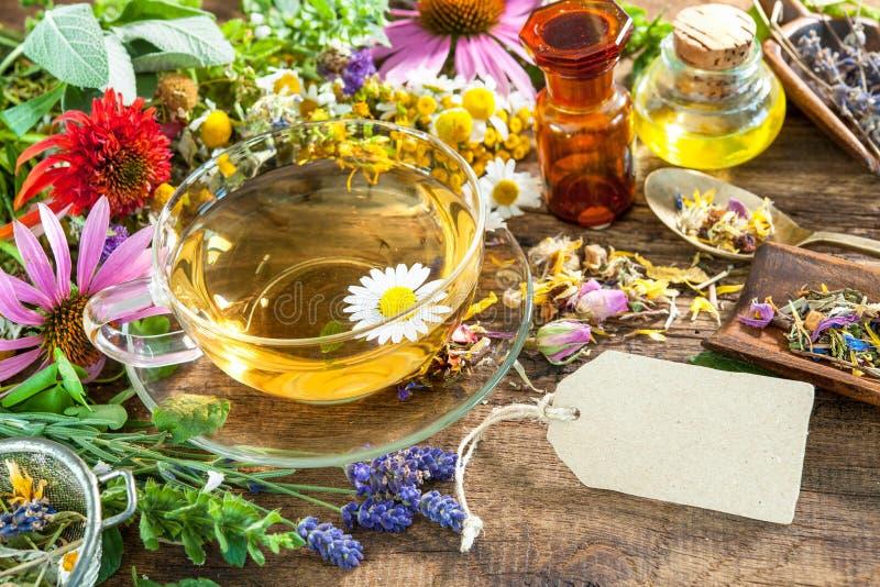 arvense φλυτζανιών equisetum εστίασης naturopathy εκλεκτικό τσάι έγχυσης αλογουρών γυαλιού βοτανικό στοκ εικόνες με δικαίωμα ελεύθερης χρήσης