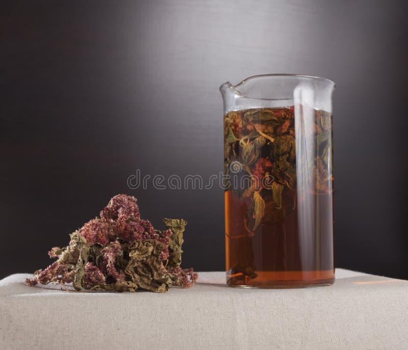 arvense filiżanki equisetum ostrości szklanej ziołowej horsetail infuzi naturopathy selekcyjna herbata fotografia royalty free