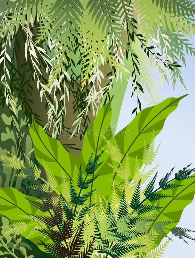Arvoredos do Fern na selva ilustração royalty free
