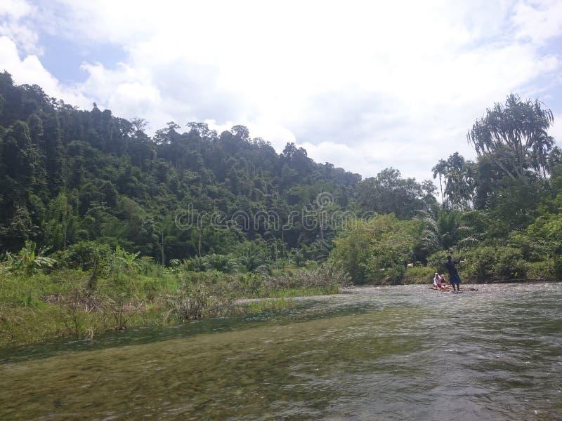 Arvoredos verdes nas selvas de Tailândia em Phuket em um dia claro imagem de stock royalty free
