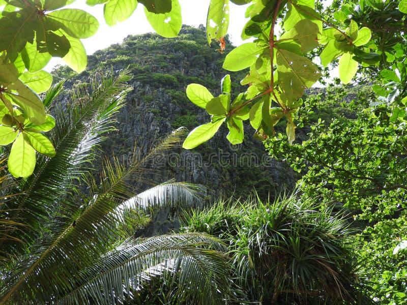 Arvoredos verdes nas selvas de Tailândia em Phuket em um dia claro foto de stock royalty free