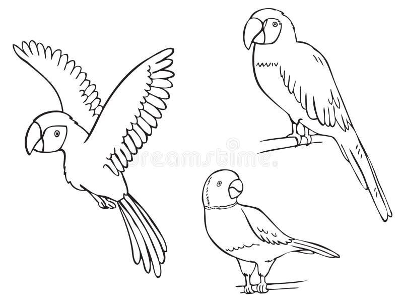 Ary papuga i zegarek kolia ilustracja wektor