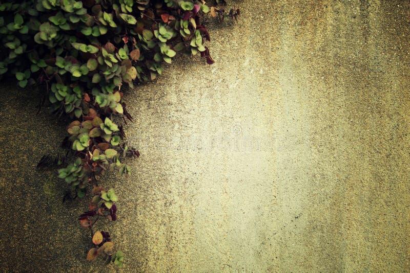 Arywista na cement ścianie z przestrzenią na dobrze, proces w rocznika stylu zdjęcie stock