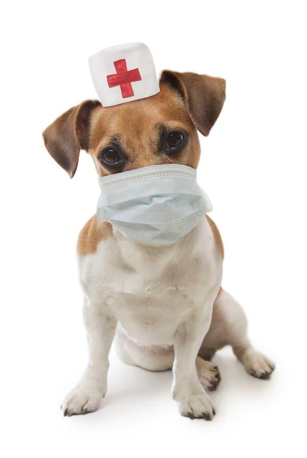 Arzthund stockfotografie